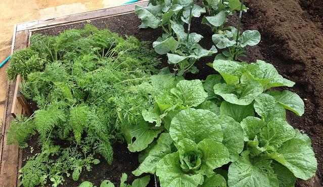 Fall 2018 Master Gardener Training