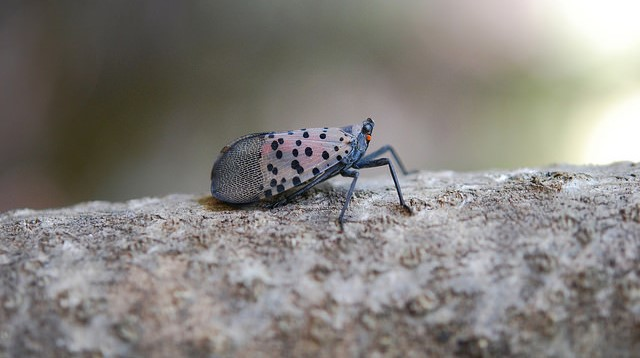Invasive Species Awareness Week is July 8-14