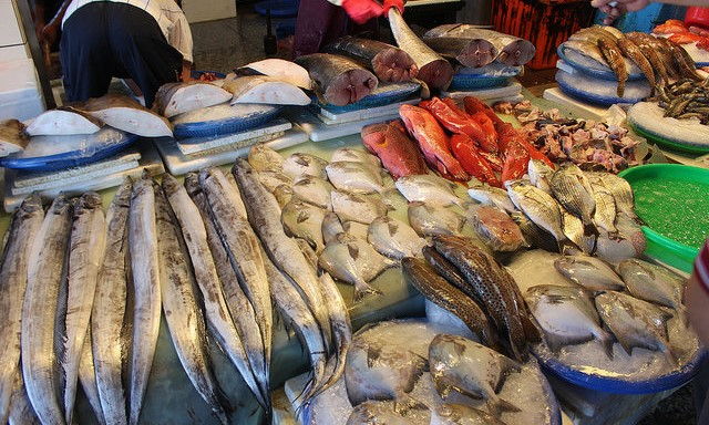 UN says overfishing still a problem