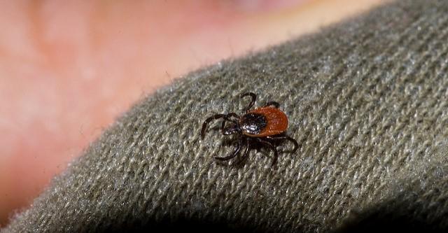 $1.17M to research tick-borne illnesses