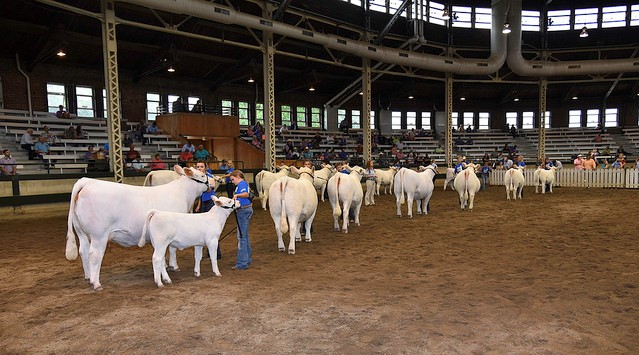 Charolais Foundation awards scholarships