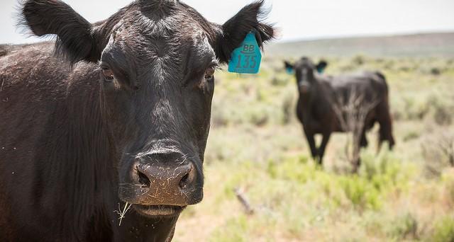 Texas Animal Health Commission completes merge