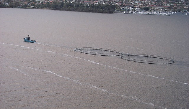 Fish farm scam nets 3 accused of swindling $500K