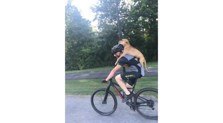 Cyclist carries stray injured dog to safety on his back, then bumps into stranger who instantly adopts it