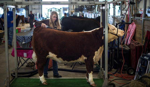 Erie County Fair early livestock deadline