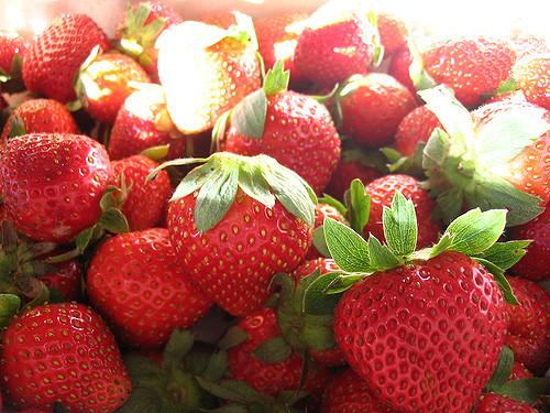 Regional strawberry pre-plant meeting, August 14