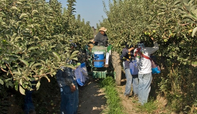 College students to build apple-picking robots