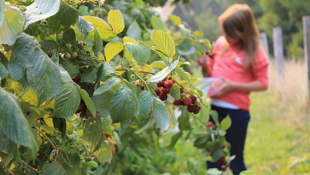 43 farms to participate in VT Open Farm Week