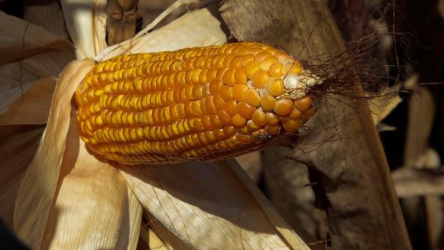 U.S. weather outlook, Brazil corn update