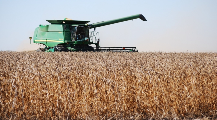 USDA reports soybean, corn acreage down