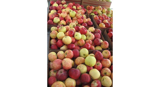 FruitGuys to ship unique apple across U.S.