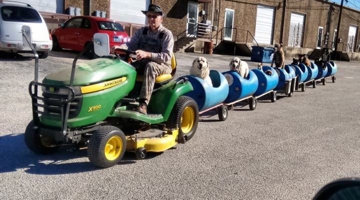 82-year-old man finds a new calling, builds a dog train for foster dogs
