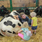 Visitors enjoyed seeing dairy cows and learning how Michigan dairy farmers care for them. (Courtesy of United Dairy Industry of Michigan)