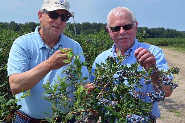 NJDA highlights Jersey Fresh blueberries