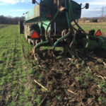 Figure 1. Manure injection into an established winter rye cover crop in the fall. (Courtesy of University of Minnesota Extension)