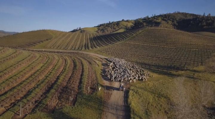 Superior Farms hosts Sheep Innovators Conference
