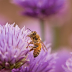 To help gardeners, University of Minnesota Extension launched a pollinator landscape survey in 2017, the first university-based online tool of its kind. So far, more than 950 people have taken the five-minute survey. (Courtesy of University of Minnesota Extension)