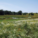 The workshops are free and will help attendees better manage farmland drainage decisions by discussing different styles of drainage systems that may be installed, including a discussion how to address drainage water quality within the Iowa Nutrient Reduction Strategy. (Courtesy of Iowa State University Extension and Outreach)
