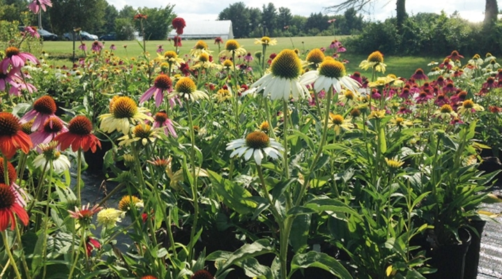 Custom wildflower mixes aid native pollinators