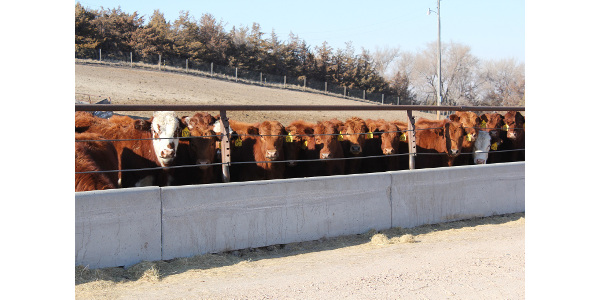 Weighing the costs and benefits of preconditioning