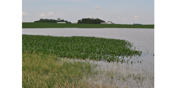 Flooded fields, saturated conditions impact crops