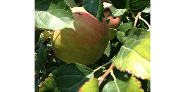 Ames Fruit and Vegetable Field Day is Aug. 6