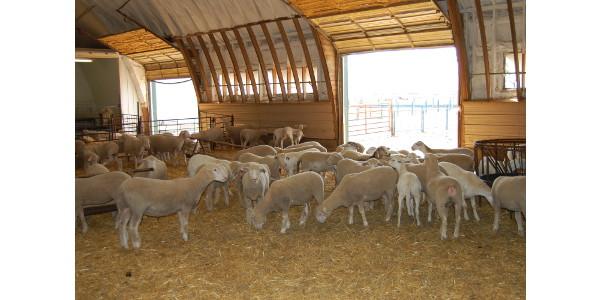 Sheep facility, handling demonstration set