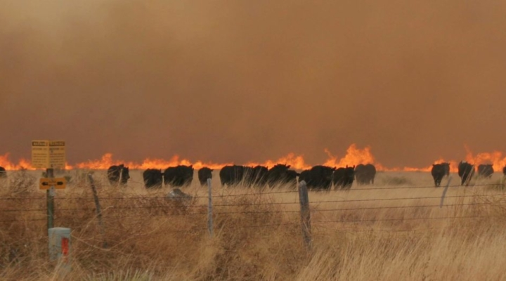 Wildfire livestock health management