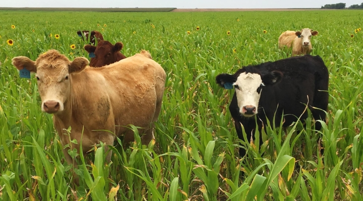 Grazing workshop to feature cover crops