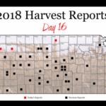 This is day 16 of the Kansas Wheat Harvest Reports, brought to you by the Kansas Wheat Commission, Kansas Association of Wheat Growers and the Kansas Grain and Feed Association. (Courtesy of Kansas Wheat)