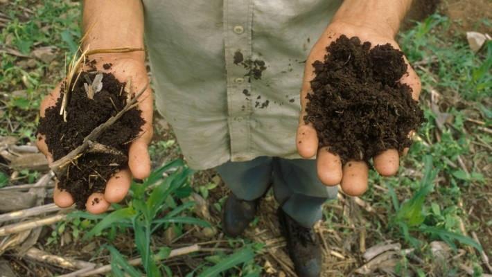 Healthy soils essential to achieve Zero Hunger