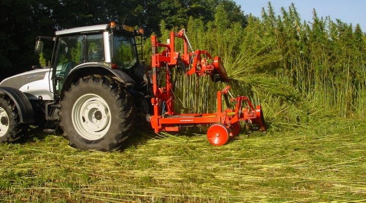 Hemp operations prepare for harvest in Maine | Morning Ag Clips