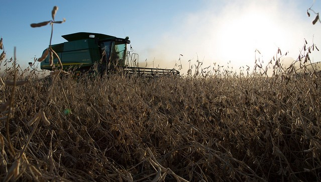 USDA forecasts record high corn, soybean yields