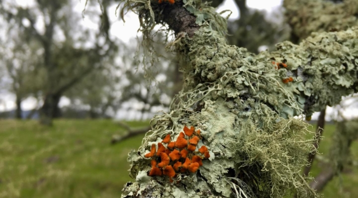 Lichen losing to wildfire, years later