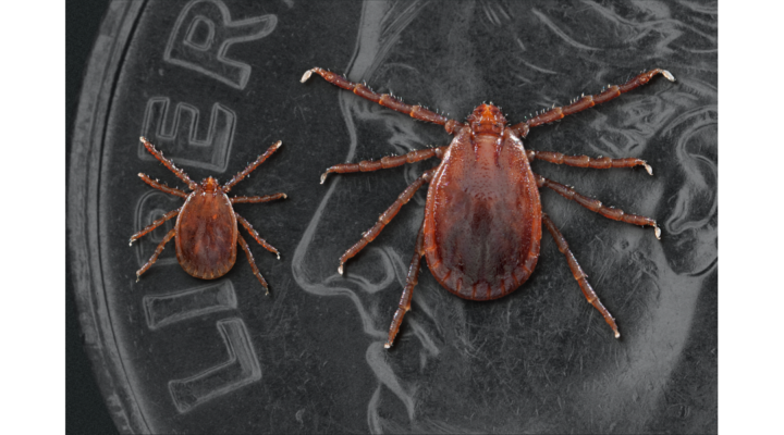 Watch out for new tick