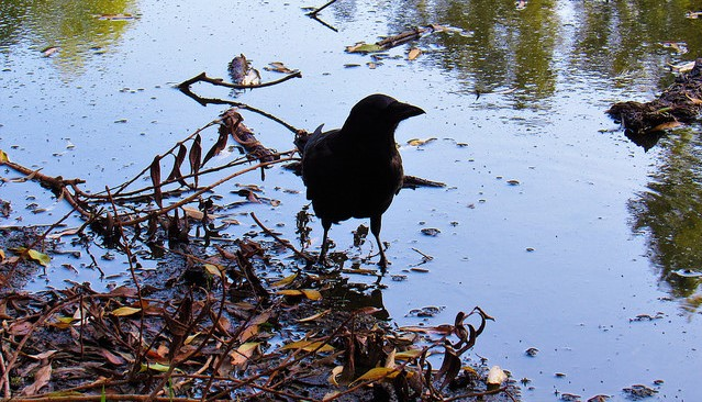 French park trains crows to pick up litter
