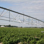 """Late August and early September often bring the question, """"When can I stop irrigating?"""" (Photo by Mindy Tape, MSU Extension)"""