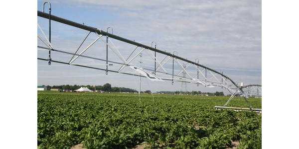 Timing the last irrigation application