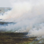 K-State Research and Extension is teaming with several agencies to host a fall burning demonstration on Sept. 11 near Thayer. (Courtesy of K-State Research and Extension)