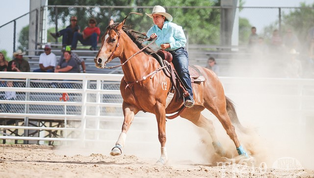 Equine events lead up to State Fair of Texas