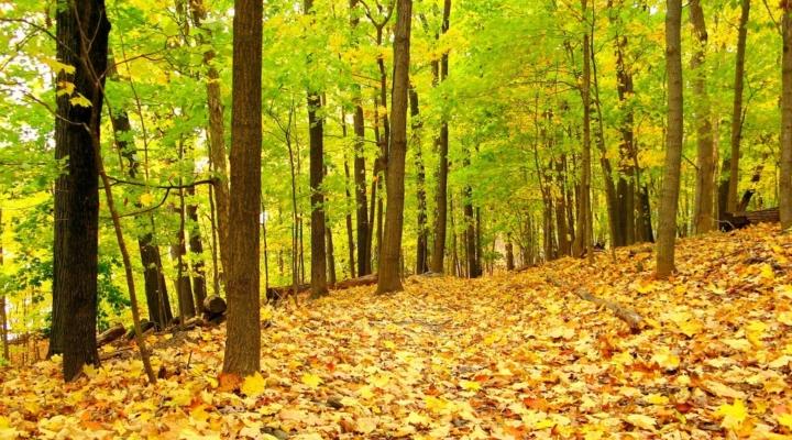 Woods Forum, September 6th