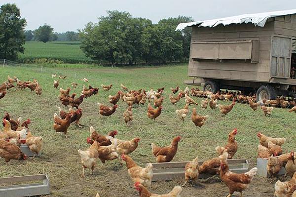 Organic grain trials and transition farm tour set