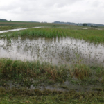 Frequently flooded croplands are good candidates for CREP enrollment. (Courtesy of Wisconsin Department of Agriculture)