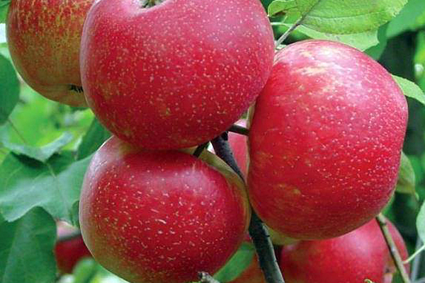 Transitional Orchard Farm Tour set for Saturday