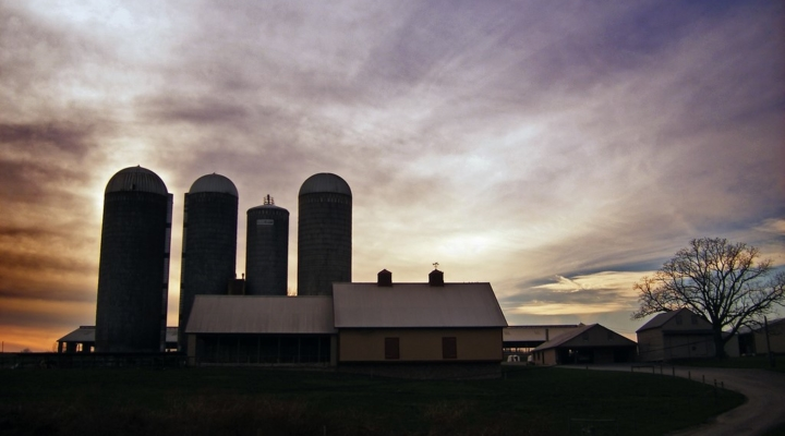 RMA announces new Dairy Revenue Protection