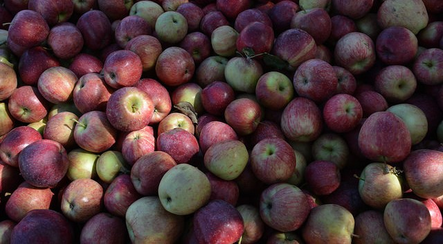 Hunger program donates nearly 110 tons of apples