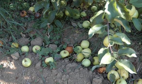 Medfly eradicated from Solano County