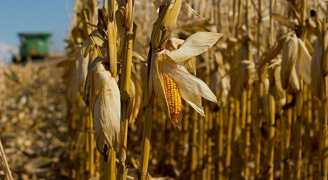 Brazil corn harvest to 50%; U.S. weather outlook