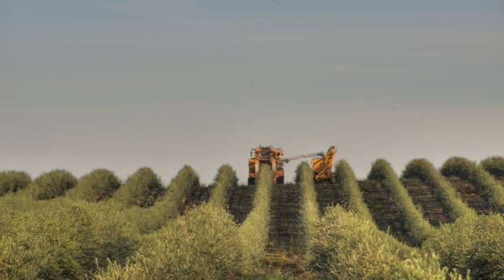 California Olive Ranch marks 20 years | Morning Ag Clips