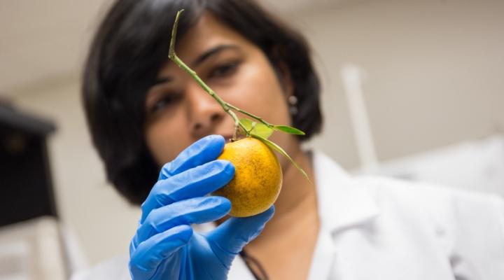 Nutrient recommendations for citrus greening